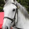 Horses - An Garda Siochana