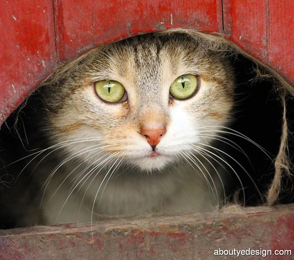 pussycat060216-600